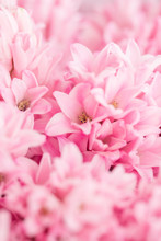 Bouquet Of Beautiful Pink Hyac...