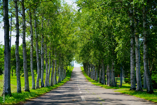 Láminas  白樺の並木道