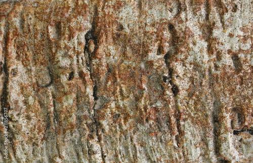 In de dag Baobab Beautiful bark of the baobab tree