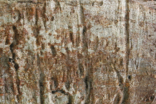 Keuken foto achterwand Baobab Beautiful bark of the baobab tree