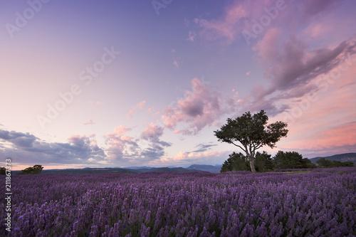 Deurstickers Aubergine Sunset over lavender