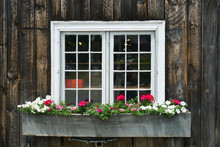 Close Up On Window Decorated With Flowerbox And Flower