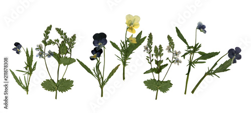 Papiers peints Pansies Pressed Dried Herbarium of Pansies and Other Flowers Isolated on White Background
