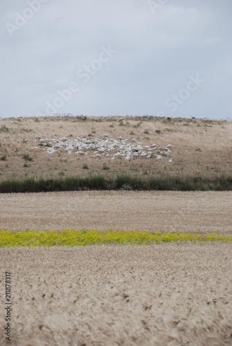 Fotografie, Obraz  Campo di grano