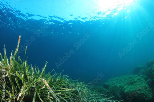 Green Sea Grass blue ocean water