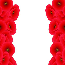Red Corn Poppy Border