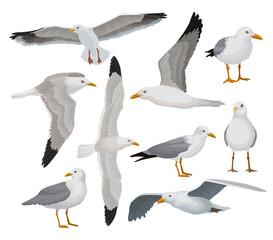 Prekrasan galeb postavljen, siva i bijela morska ptica u različitim pozama vektorske ilustracije na bijeloj pozadini