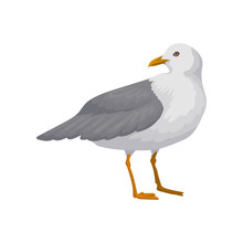 Beautiful Seagull, Gray And White Sea Bird Vector Illustration On A White Background
