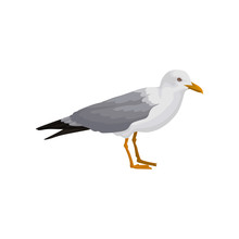 Seagull Standing, Gray And White Sea Bird, Side View Vector Illustration On A White Background