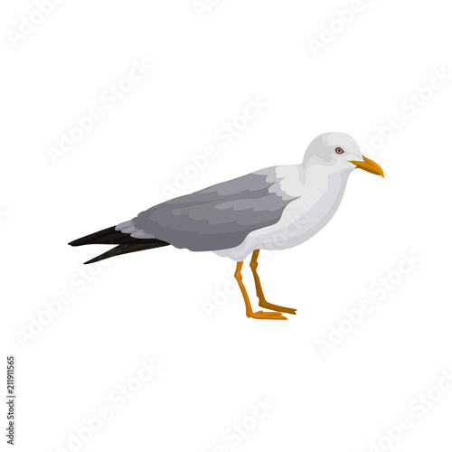 Fotografía Seagull standing, gray and white sea bird, side view vector Illustration on a wh