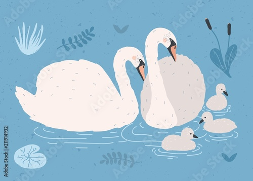 Fotomural Couple of white swans and brood of cygnets floating together in pond or lake among plants