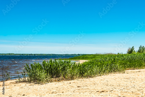 Photo  Sandy beach of the sea with green cane - a concept of relaxation