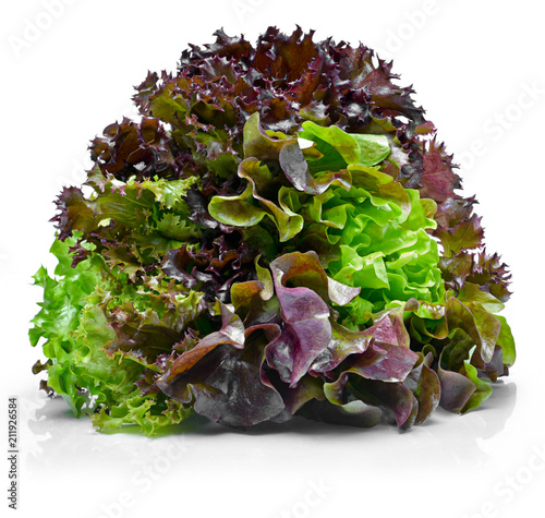 Delicious, fresh oak salad or salad mix. tricolor salad or mixed lettuce, isolated on white background.