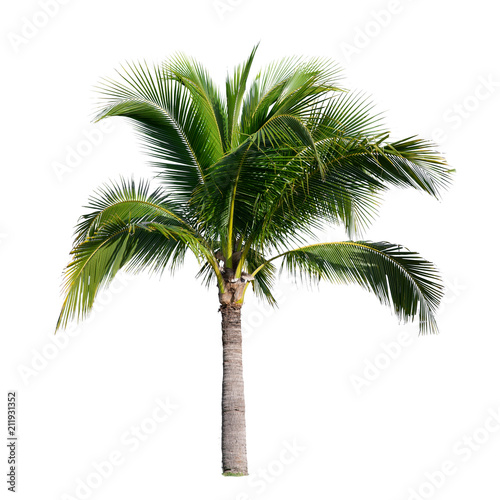 Deurstickers Palm boom coconut palm tree