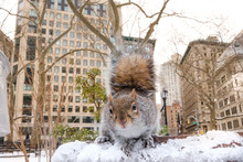 Squirrel Snow Animal