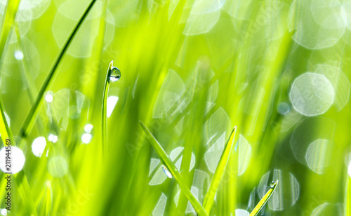 Fotobehang Gras Drops of dew on the beautiful green grass, background close up