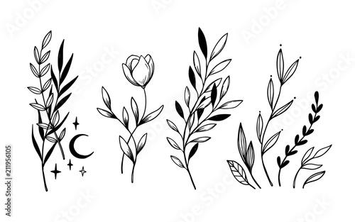 Obraz na płótnie Hand sketched vector vintage elements ( laurels, leaves, flowers, swirls, moon)