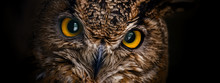 Yellow Eyes Of Horned Owl Clos...