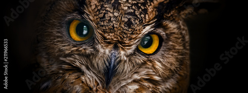 Staande foto Uil Yellow eyes of horned owl close up on a dark background.
