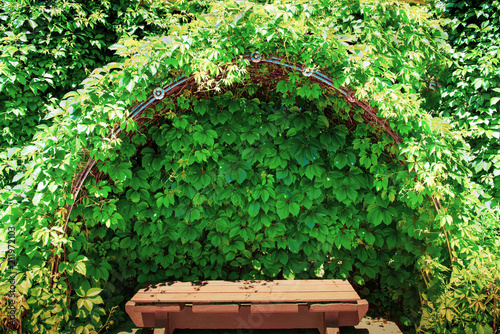 Fotografie, Obraz  bench in the grape shadow