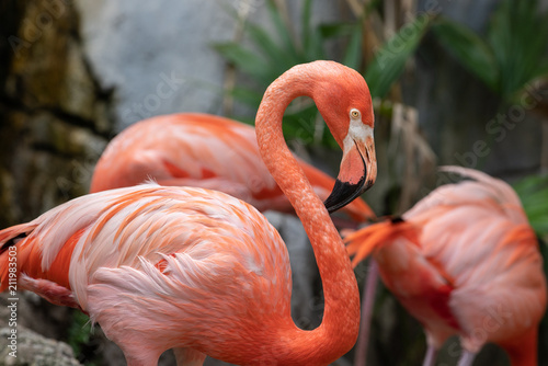 Foto op Canvas Flamingo vibrant flamingo poses for a side profile