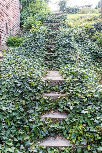 Fotografía  Von Efeu zugewachsene Treppe