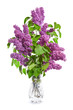 Bouquet of purple lilacs in a crystal vase on a whitebackground.