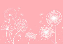 Dandelion  Background. Delicate Soft Background. Greeting Card. Vector Meadow Illustration.