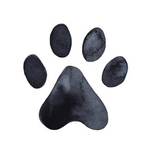 Dog Or Cat Paw Print Graphic I...