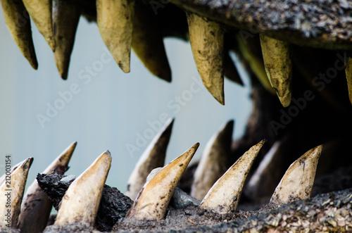 Fotografie, Obraz  Close-up of a crocodile's teeth, terrifying photograph