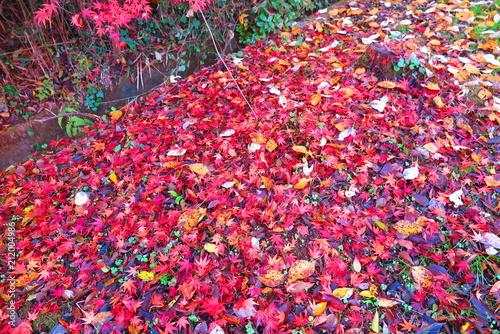 秋の湖畔の風景16