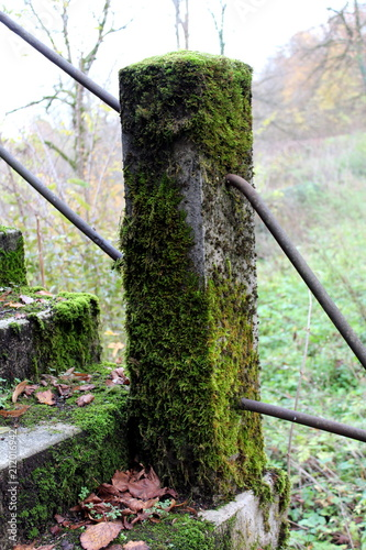 Fotografía  Overgrown stone fence pole covered almost completely with moss with two thick me