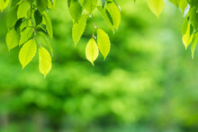Backlit Green Leaves Overlay Background