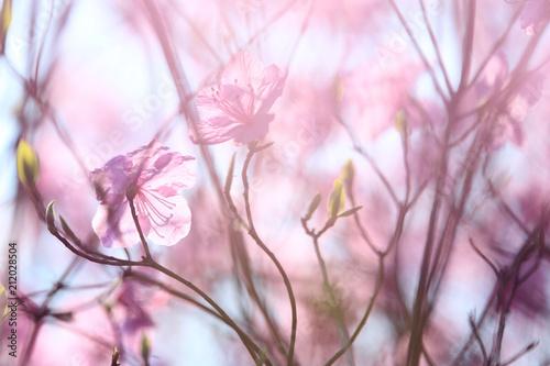 Keuken foto achterwand Azalea blear pink azalea