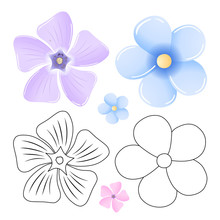 Periwinkle, Forget-me-not Patt...