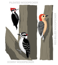 Bird Woodpecker Set Cartoon Ve...