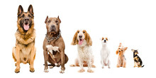 Dogs Sitting Together Isolated On White Background