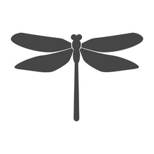 Vector Of Dragonfly Design On ...