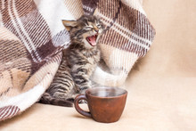 The Little Kitten Woke Up And Yawns. A Cup Of Coffee In Front Of A Kitten. Coffee In Bed. Morning Begins With Coffee_