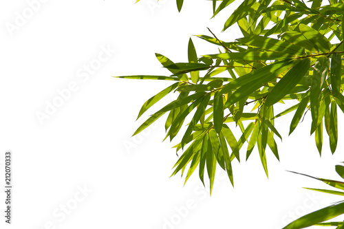 In de dag Bamboo Green Energy.Leaf pattern green leaves bamboo isolated on white or abstract with background. World for water day or National Forest Conservation Day.