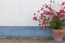 Big Clay Flowerpot With Red Flowers Against White And Blue Wall. Outdoor Decoration. Gardering Design. Large Vase With Blooming Flowers On Street. Europe And Travel Concept.
