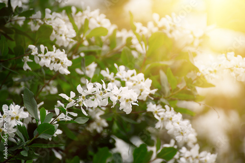 Wall Murals Lily of the valley White flowers blossoming in spring time, natural vintage background