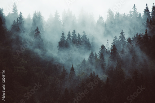 Photo  Misty landscape with fir forest in hipster vintage retro style