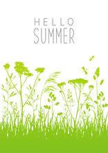 Green Summer Meadow With Grass Silhouettes