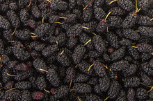 Texture Of Fresh Mulberry