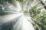 Fototapeta Forest - hikari