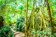 Forest Jungle Of The Cat Ba Island, Halong Bay In Vietnam