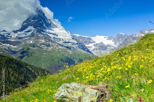 Poster Taupe Floraison d'altitude