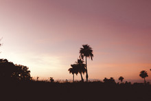 Beautiful Silhouettes Of Palm ...