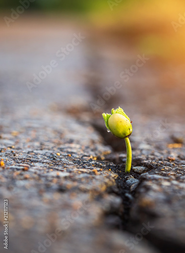 One green young seed of tree growing from cracks of asphalt road Canvas Print